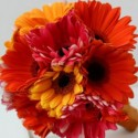 Summerpots Bridal Bouquet - Rouge Daisy